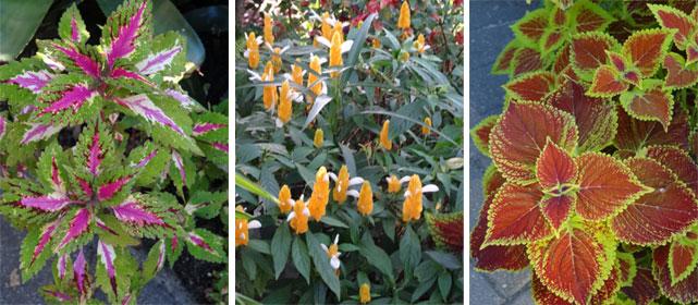 Sweetwater Oaks Garden flowers